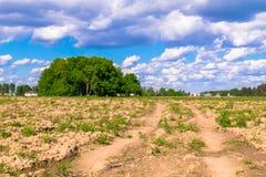 Zonnig landschap van het platteland in het begin van de zomer Talrijk onkruid en onlangs gelegde hobbelige weg over het geploegde royalty-vrije stock afbeelding