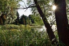 Zonnig meer dat door bomen en gras wordt omringd Royalty-vrije Stock Foto