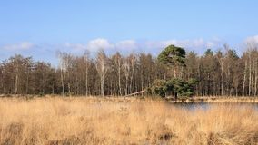 Zonnig moerasland met een bosrand, Nederland Stock Afbeelding