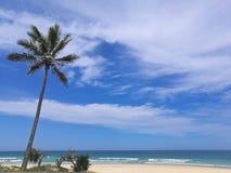 Zonnig strand met palmkokospalm in Gouden Kust Australië Stock Foto
