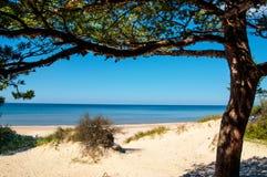 Zonnig strand van de Oostzee Stock Afbeeldingen