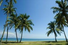 Zonnig tropisch strand Royalty-vrije Stock Foto