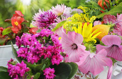 Zonnig tuinbloemstuk Stock Fotografie