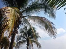 Zonnig weer op het strand en de palmbladen Stock Afbeeldingen