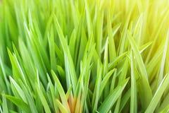 Zonnige abstracte groene natuurlijke vage achtergrond stock foto