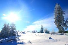Zonnige blauwe die hemel in de winter en pijnboombomen met sneeuw worden behandeld Royalty-vrije Stock Fotografie