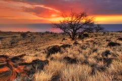 Zonnige boom van Hawaï Stock Afbeelding