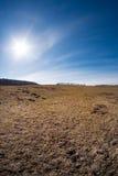 Zonnige dag bij de lenteweide Stock Foto