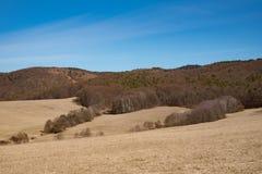 Zonnige dag bij de lenteweide Stock Fotografie