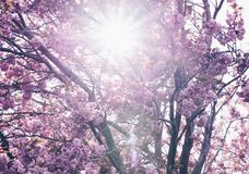 Zonnige dag in de lenteboom royalty-vrije stock foto