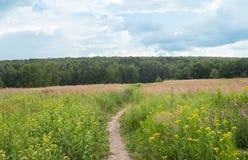 zonnige dag in de plattelands aarden weg in het gras royalty-vrije stock fotografie