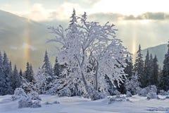 Zonnige dag in de de winterbergen stock afbeelding