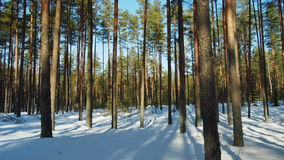 Zonnige dag in de winterbos stock footage