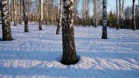 Zonnige dag in de winterbos stock video