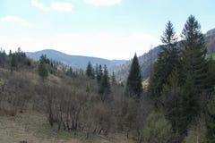 Zonnige dag in het bos Stock Foto's