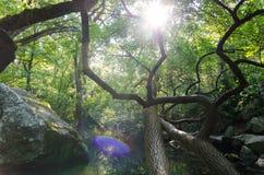 Zonnige dag in het bos royalty-vrije stock foto's