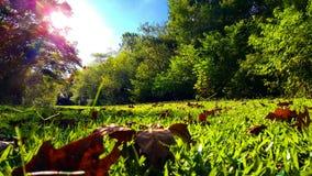 Zonnige dag in het hout Stock Foto's