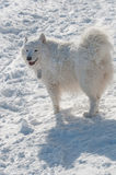Zonnige dag na een sneeuwstorm Royalty-vrije Stock Afbeeldingen