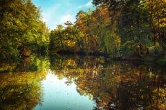 Zonnige dag in openluchtpark met de bezinning van de herfstbomen Royalty-vrije Stock Foto's