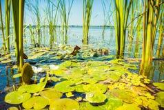 Zonnige dat op de rivier De Dnieper-Rivier, de Oekraïne Stock Afbeelding