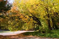 Zonnige de herfstdag in het park Stock Fotografie