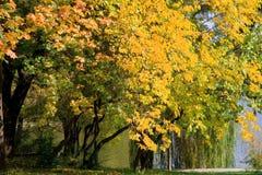 Zonnige de herfstdag in het park Stock Foto's
