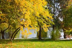Zonnige de herfstdag in het park Royalty-vrije Stock Afbeelding