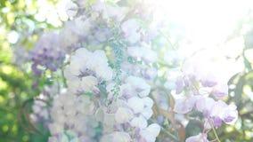 Zonnige de lentebloemen stock videobeelden