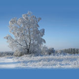 Zonnige de winterdag Royalty-vrije Stock Fotografie