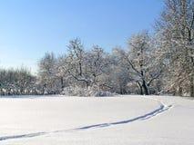 Zonnige de winterdag Stock Afbeeldingen