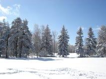 Zonnige de winterdag Stock Foto