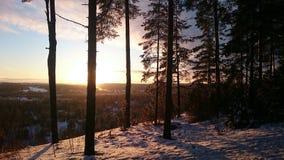Zonnige de winterdag Boomsilhouetten stock fotografie