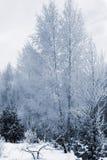 Zonnige de winterdag in bosn4 Stock Foto's