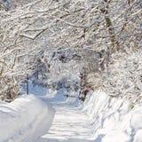 Zonnige de winterdag in bosn3 Royalty-vrije Stock Afbeeldingen