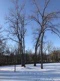 Zonnige de winterdag in het park Royalty-vrije Stock Afbeeldingen