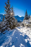 Zonnige de winterexpeditie aan de bergen Stock Foto's