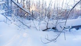 Zonnige de winterochtend in het bos stock footage