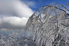 Zonnige de winterochtend in Karpatische Bergen Royalty-vrije Stock Afbeelding