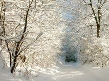 Zonnige de winterweg stock afbeelding