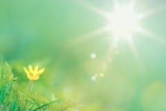 Zonnige de zomermening van één enkele gele boterbloem Stock Foto's