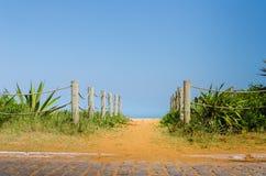 Zonnige en groene weg aan strand Stock Fotografie