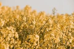 Zonnige gele gebiedsavonturen! Esthetisch stock fotografie