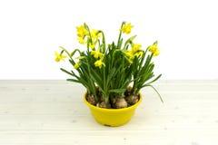 Zonnige gele gele narcis narcisses op een houten lijst royalty-vrije stock afbeelding