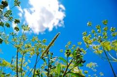 Zonnige gras en installaties Stock Foto