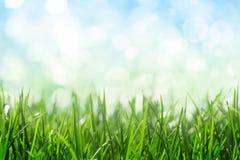 Zonnige het onduidelijke beeldachtergrond van de de lenteweide Royalty-vrije Stock Afbeeldingen