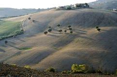 Zonnige heuvel bij dageraad met geïsoleerde olijfbomen en sommige landbouwbedrijven royalty-vrije stock fotografie