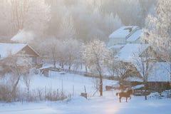Zonnige ijzige ochtend in dorp Paard die op de wintergebied lopen stock foto