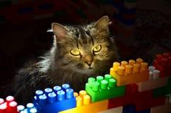 Zonnige kat Stock Foto