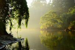 Zonnige lichte gloeiende boom langs rivier Stock Fotografie