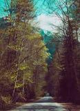 Zonnige mooie romantische bos geasfalteerde weg in de bergen Royalty-vrije Stock Afbeelding